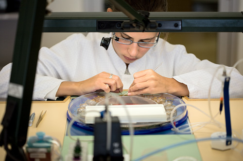 Watchmaker working on a tray with 3120 calibres at Audemars Piguet